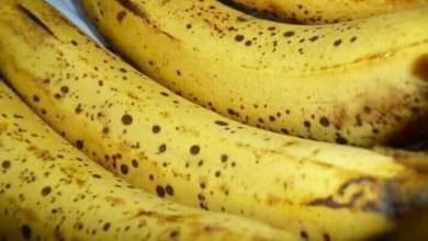 Photo of لجنة التصدير: لم يتم منح رخص استيراد الموز اللبناني حتى الآن وكلفة أي موز لا تتجاوز دولار واحد