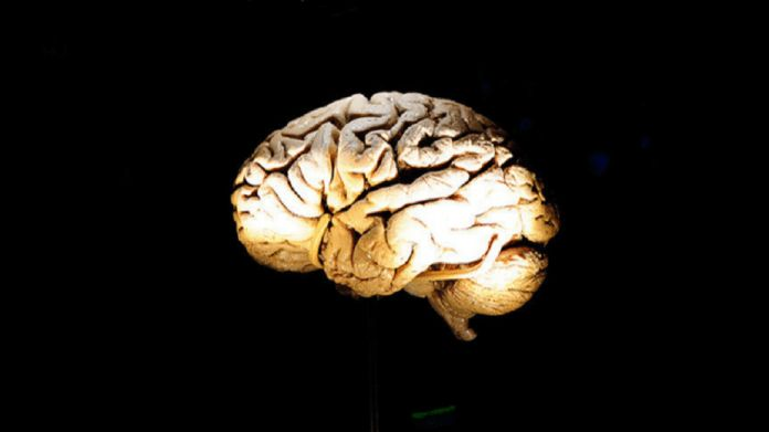 Scientists are proving the ability of SARS-CoV-2 to infect the human brain