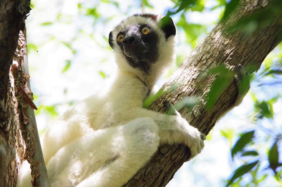 アフリカの中のアジア 不思議な島マダガスカルの魅力