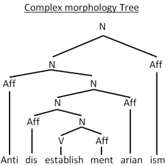 Morphology Tree Diagram Lewis Dot For K What Is All About Linguistics Drawing Trees