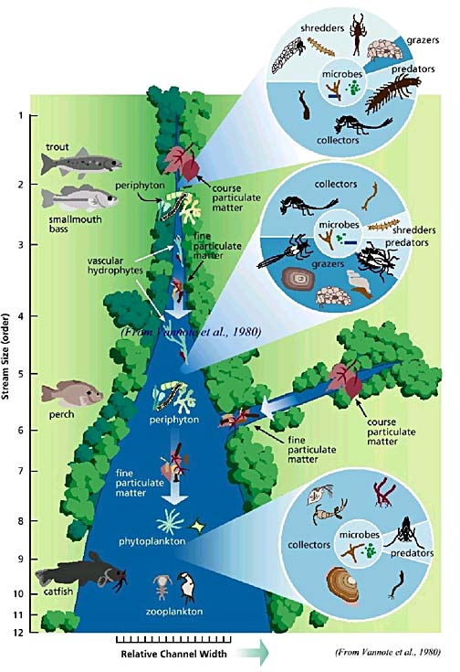 Schematic illustration of the River Continuum Concept, as modified from Vannote et al. (1980)