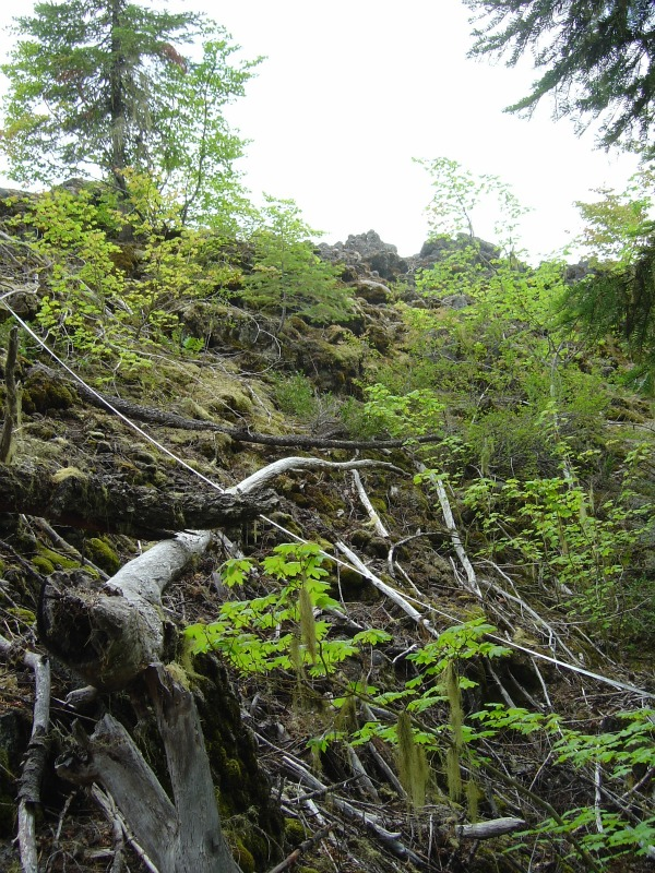 Not a stream. Allochthonous input onto the surface of a lava flow, from the edge of a forest.