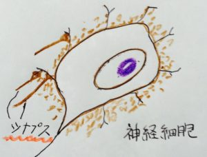 blog neuron synapse synuclein 20160320