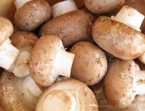 無題 mushroom 20160518 blog