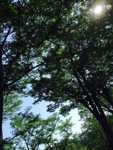 IMG_0931 nature tree