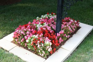 caring for shrubs and bushes