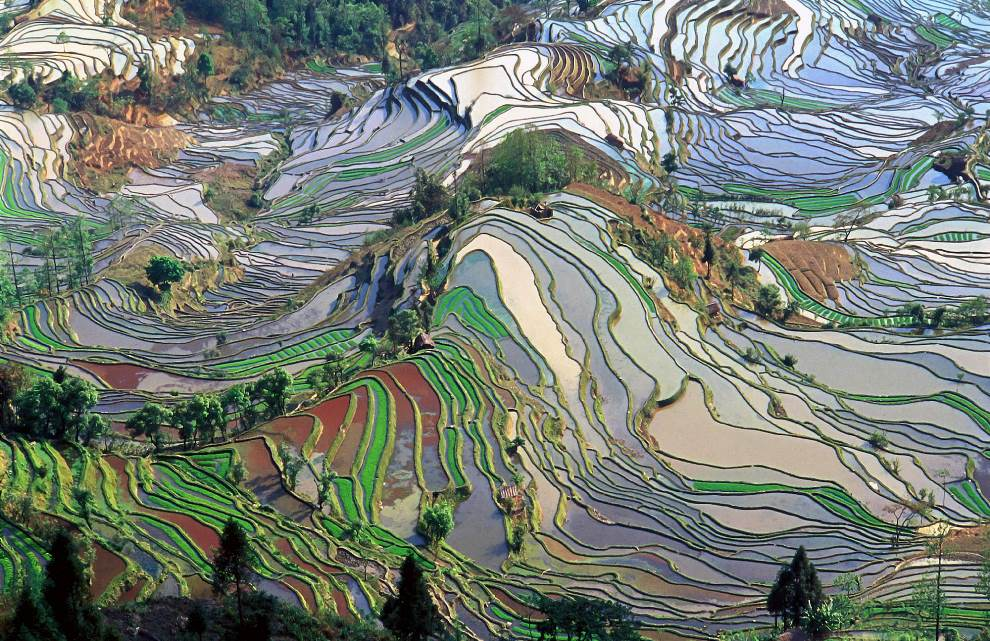 Terraced Rice Fields In Yunna China