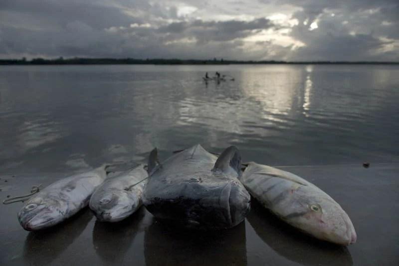 Amazing Natural Events Fish Rain