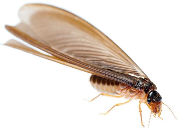 Termite Fishing