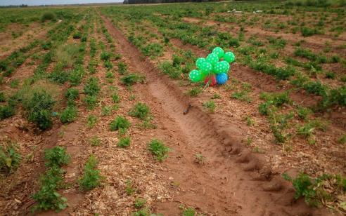 צרור בלונים עם חפץ חשוד אותר בשדה חקלאי באשכול – חבלן הוזמן למקום