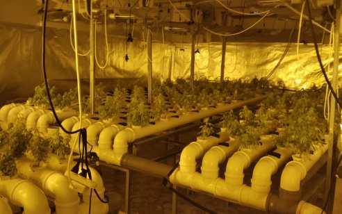 800 שתילי מריחואנה אותרו במעבדת הידרו בקלנסואה