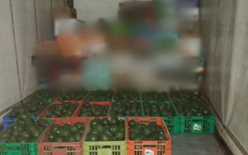 """סוכל גניבת 340 ק""""ג אבוקדו מהשטחים החקלאיים של קיבוץ אושה"""