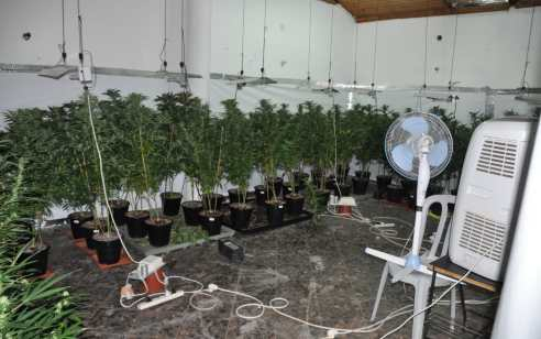 """50 ק""""ג של שתילי מריחואנה בשווי מוערך של מאות אלפי שקלים נתפסו בדירה בחולון"""