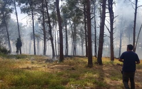 תיעוד: כוחות רבים פועלים לכיבוי שריפה גדולה ביער משמר העמק