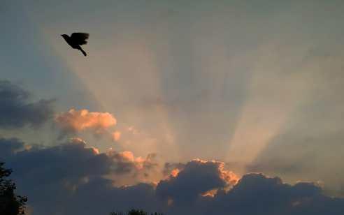 תחזית מזג האוויר לשבוע הקרוב מעודכן ליום שני ה' תמוז 8/7/2019