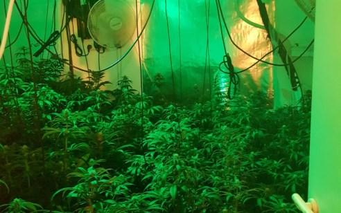 נחשפה מעבדה לגידול והפקת סמים מסוג מריחואנה בלב שכונת מגורים בקריית אונו