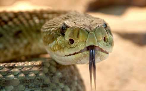 ערד: גבר כבן 24 הוכש מנחש ונפצע קשה