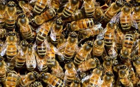 שבעה בני משפחה נפצעו קל עד בינוני לאחר שנעקצו על ידי דבורים בפארק בספסופה