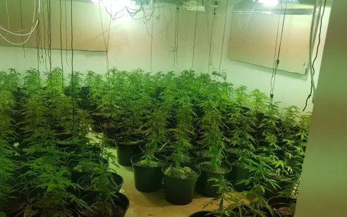 """מעבדה לגידול וייצור סמים נחשפה בבית מגורים בחולון: 65 ק""""ג של שתילים החשודים כמריחואנה נתפסו"""