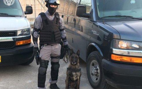 רמבו הצליח לאתר משלוח סמים גדול שהיה מיועד לאסירים בכלא ׳השרון׳