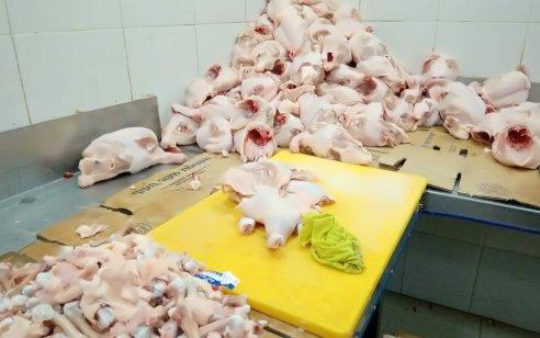 כ-4 טונות של בשר מוברח מהשטחים ואשר אינו ראוי למאכל נתפסו בקלנסווה
