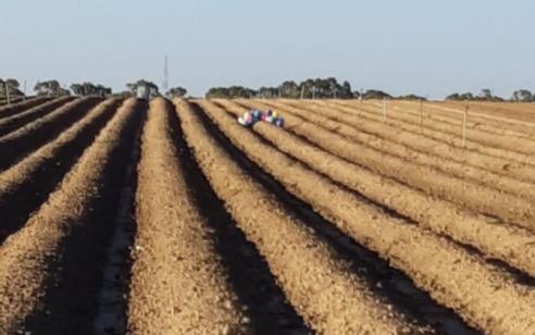 צרור בלונים חשוד אותר בתוך שטח חקלאי במועצה האזורית אשכול – חבלן במקום