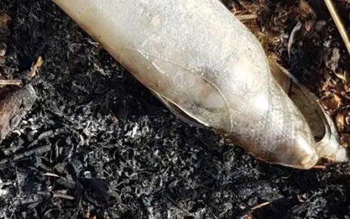 מחבל נורה בפלג גופו התחתון לאחר שיידה בקבוק תבערה