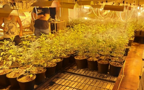 """יהוד: נחשפה מעבדה לגידול סמים ובה מאות שתילים – תושב ת""""א בן 31 נעצר"""