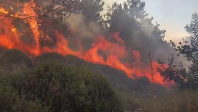 שריפה גדולה סמוך לקריית טבעון: חשש מהתפשטות לכיוון חוות הגז הסמוכה