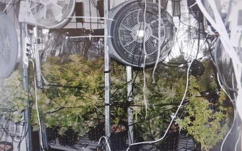 מעבדת סמים ענקית אותרה בדירה באשדוד – 4 תושבי העיר נעצרו