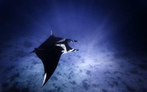 """""""לפתע זהיתי מנטה במים"""": תצפית נדירה בשמורת הטבע אלמוגים במפרץ אילת"""