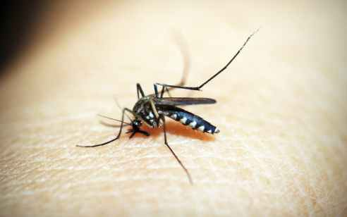 לראשונה מאז תחילת 2020: התגלו יתושים נגועים בקדחת מערב הנילוס באזור הערבה ובאזור הגלבוע