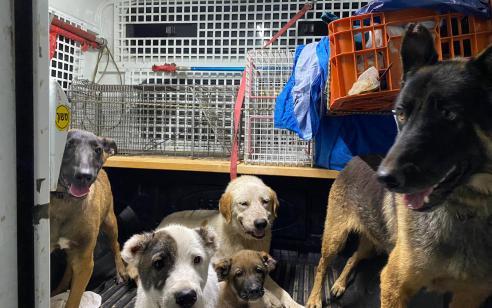 לצד מציאת כחצי קילו סמים ותחמושת: אותרו 11 כלבים שהוחזקו בתנאים ירודים בבית ברמלה