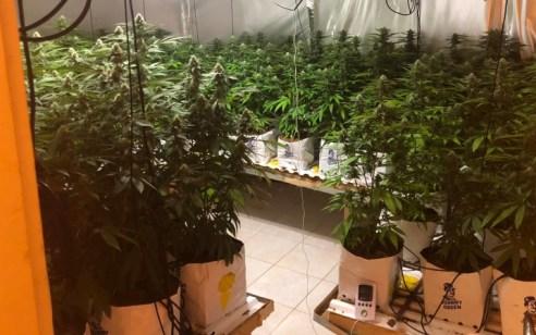 מעבדת סמים נחשפה בדירת מגורים בחולון – תושב העיר נעצר בחשד להפעלתה