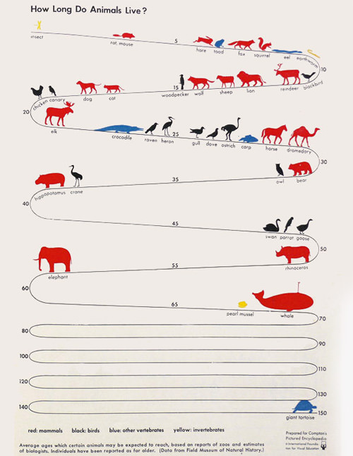 Πόσα χρόνια ζουν τα ζώα;