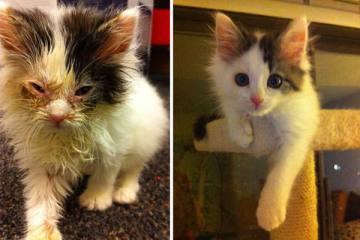 Γάτες που σώθηκαν από βέβαιο θάνατο!