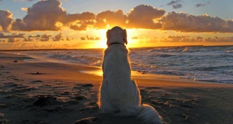 5 απίστευτα πράγματα που οι σκύλοι διαισθάνονται πριν συμβούν