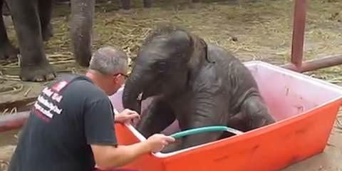 Ελεφαντάκι κάνει μπάνιο και ξετρελαίνει το διαδίκτυο!