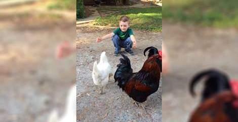 αγοράκι ζητά μια αγκαλιά από μία κότα