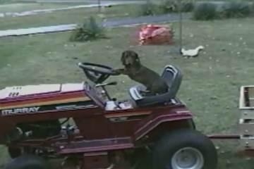 Όταν οι σκύλοι πιάνουν το τιμόνι
