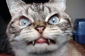 Ο γάτος Δράκουλας κάνει θραύση στο Instagram (εικόνες)