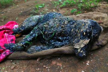 σκύλος είχε πέσει σε μια δεξαμενή με ζεστή πίσσα