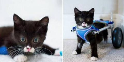 Γατάκι χωρίς πόδια κάνει τα πρώτα του βήματα με το νέο του αναπηρικό καροτσάκι.