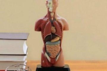 ανατομία του ανθρώπινου σώματος