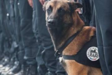 Diesel: Ο αστυνομικός σκύλος που σκοτώθηκε στις επιχειρήσεις στο Παρίσι
