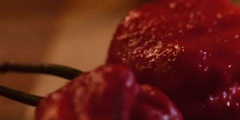 δοκίμασαν την πιο καυτερή πιπεριά του κόσμου