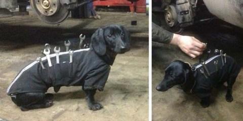 Αυτός ο σκύλος «εργαλειοθήκη» είναι ο πιο χαριτωμένος βοηθός μηχανικού αυτοκινήτων