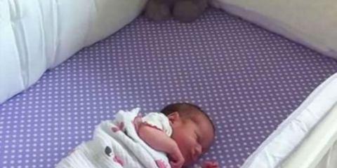 προστατεύει ο σκύλος της οικογένειας το νεογέννητο μωρό