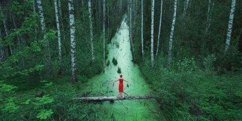 Δάση χωρίς τέλος, Ρωσία