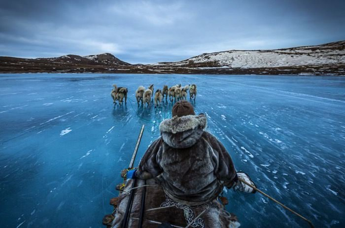 Σκύλοι τραβούν έλκηθρο στην Γροιλανδία